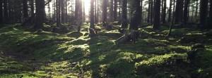 Skoven skovbund og sol