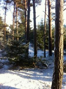 Vinter træer sol og skygge