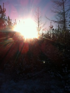 Vinter sol gennembrud
