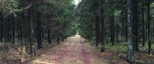 Den lange vej